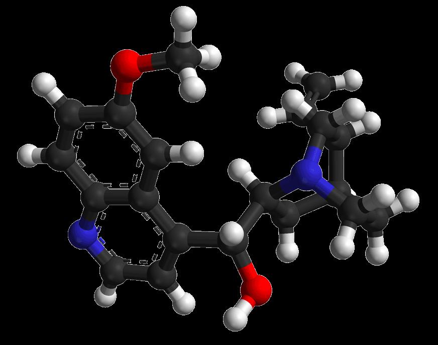 Le quinina, l'arbuste péruvien à l'origine de la chloroquine