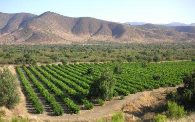 À la conquête des vins du Nouveau Monde