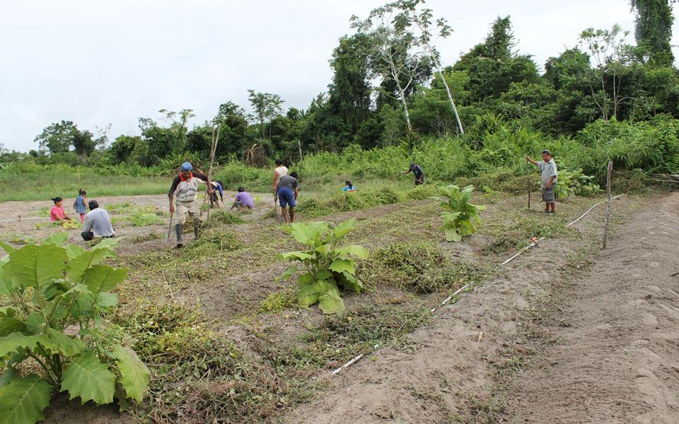 Lettre originaire d'une maison de la communauté Shipibo dans la jungle amazonienne.