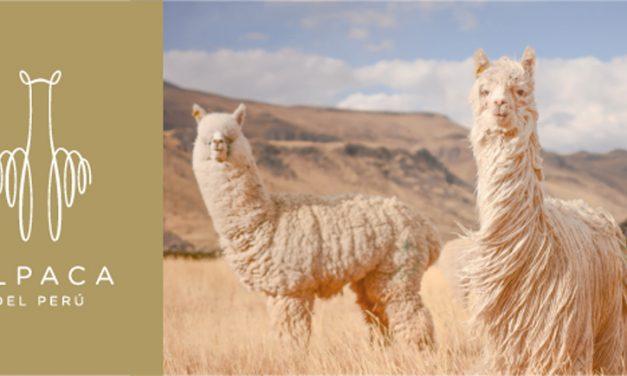 La lana de Alpaca, utilizada para un concurso internacional en Francia