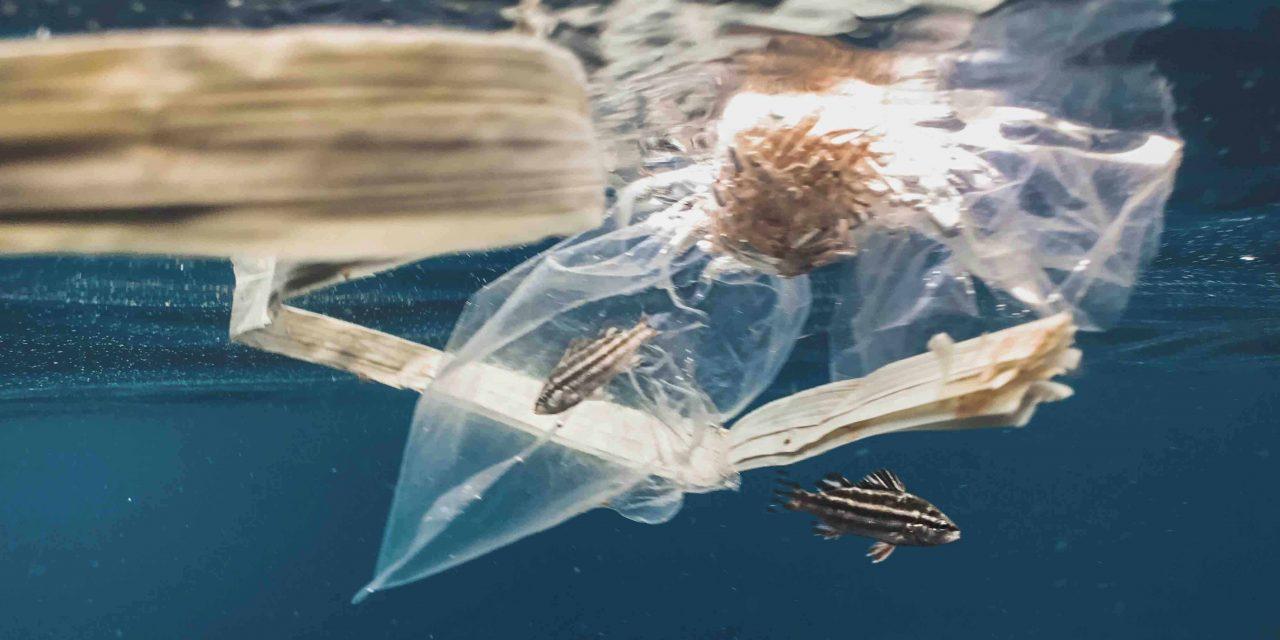 Les sacs hydrosolubles, une révolutionnaire invention chilienne